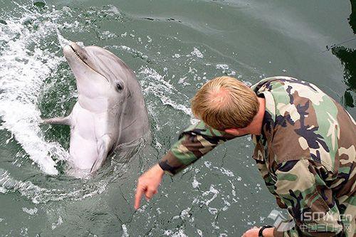 """美国海军特种部队""""海豹""""突击队曾训练海豚和"""