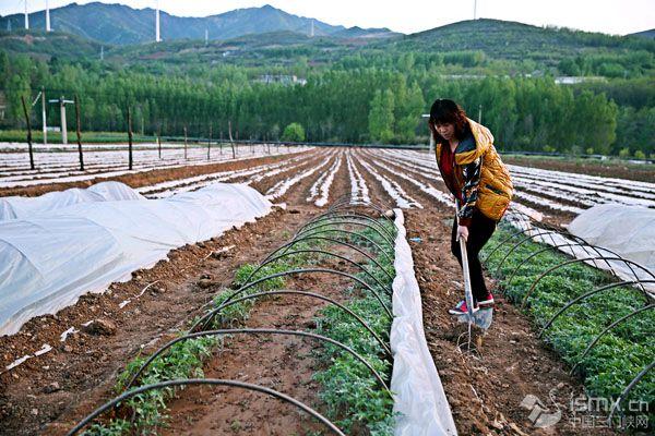 加强蔬菜标准化基地建设