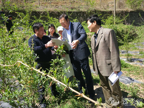 河南农业大学程传兴书记等一行赴卢氏调研特色农业发展