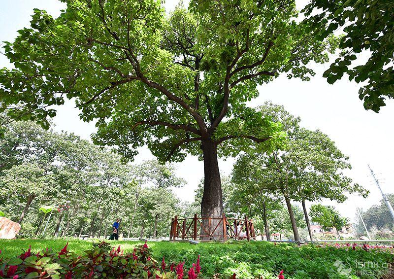 哪一棵树,活在人民心中?