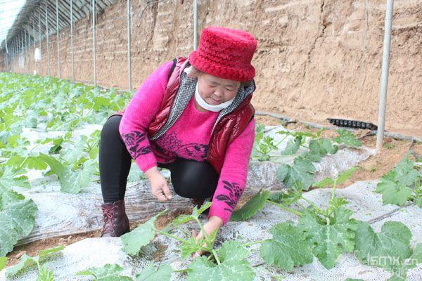 """大棚种植增加农民收入"""""""