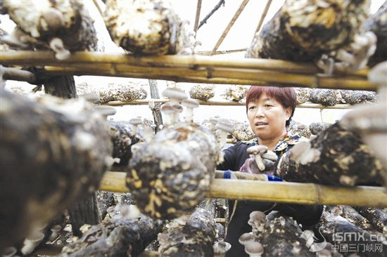 菇菌香飘致富路