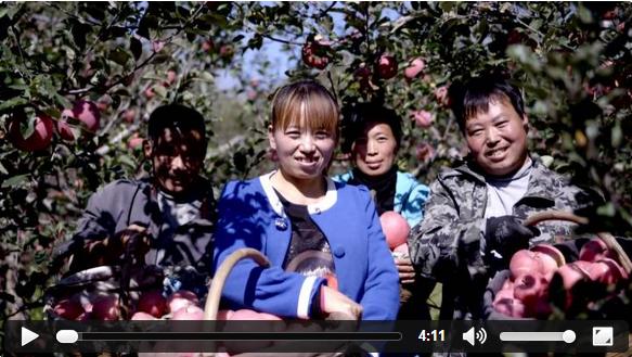 《新华视点》庆丰收:苹果熟了果农笑了