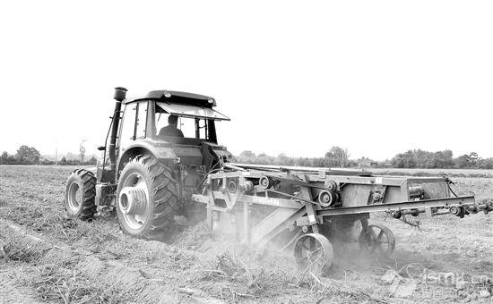 大型农机助力灵宝中药材种植