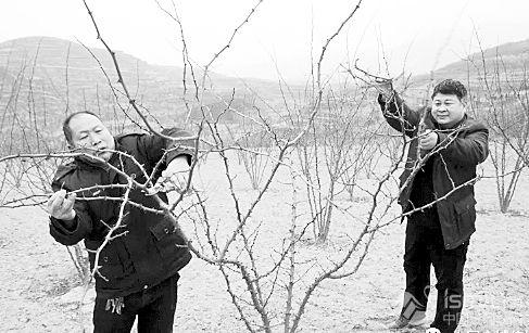 """花椒种植带动全村经济得到快速发展"""""""