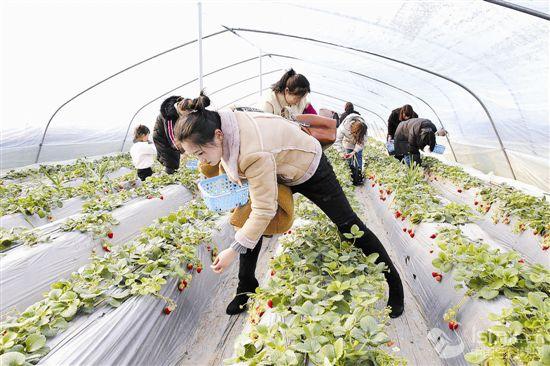 发展观光农业 助力脱贫攻坚