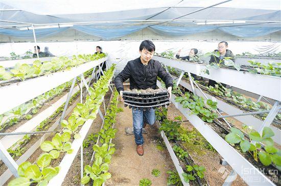 创意农业提高果蔬质量