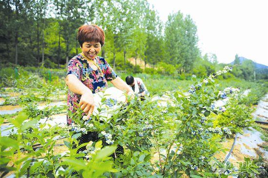积极调整农业产业结构