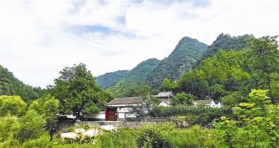 绿荫中的小山村