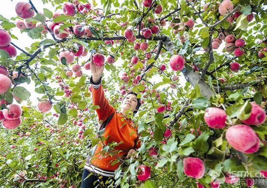 建靚天鵝城 增彩大中(zhong)原