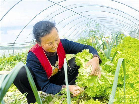 蔬菜大棚(peng)助�r民致富(fu)