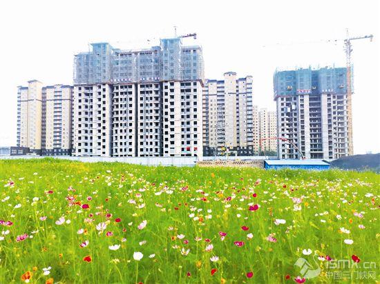 种草养花打造绿地家园