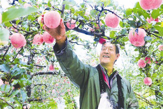 完善激励机制 促进农业稳定增效