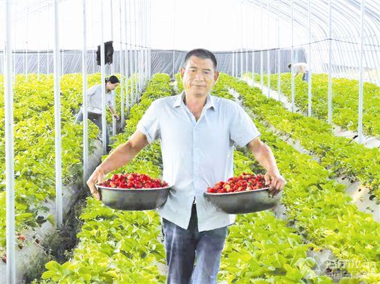 """草莓种植 富了一方百姓"""""""