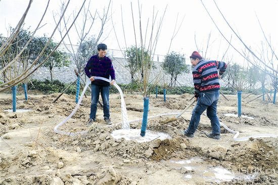 """浇灌沿黄绿化树木 保护生态廊道环境"""""""