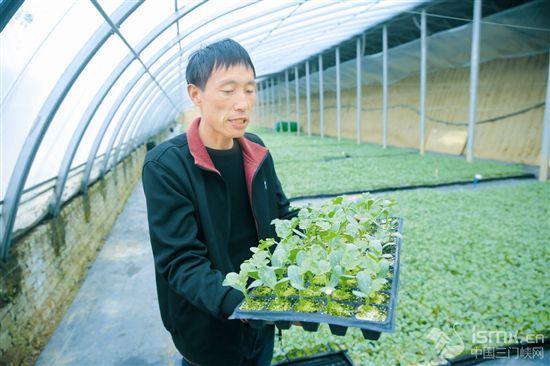 订单育苗助农增收