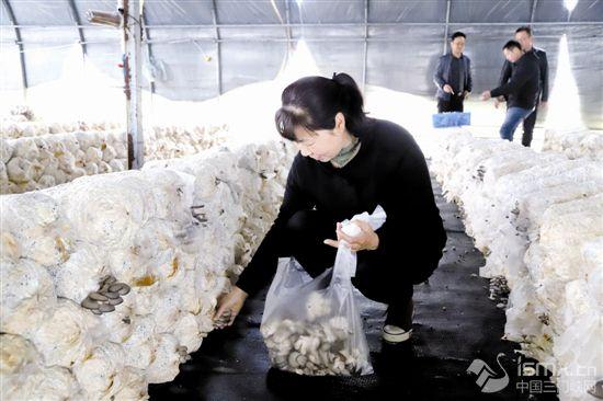 大棚蘑菇助力乡村振兴