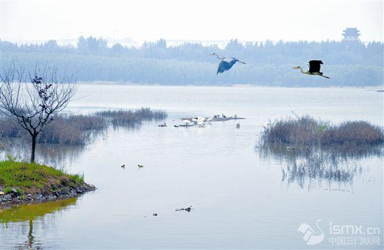 美丽天鹅湖 鸟类栖息地