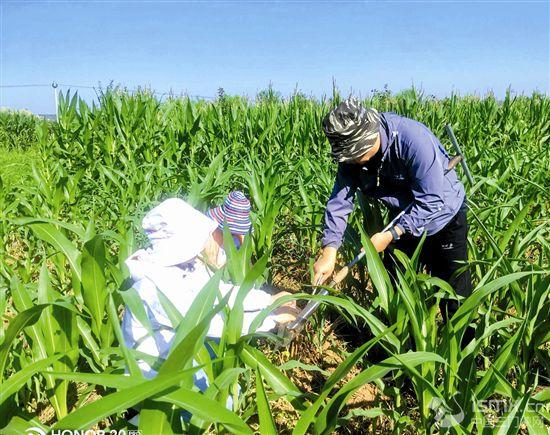 加强灾情监测确保农业安全度汛