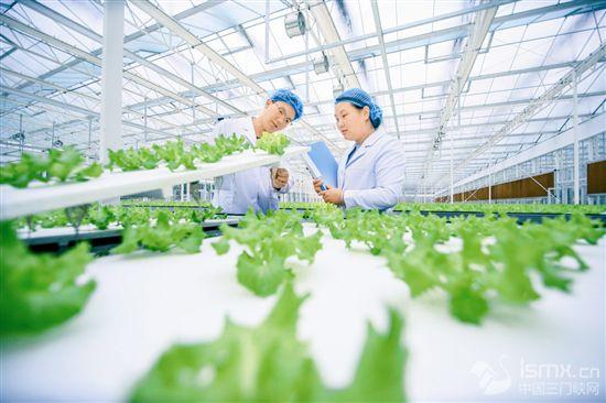 AI助力农业迈入现代化