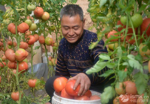 反季蔬菜助农民致富