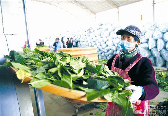 农产品加工增效益高