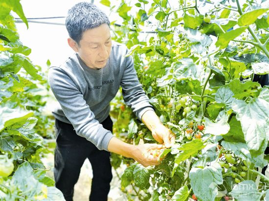 杨家村:果蔬飘香地 美名闻三省